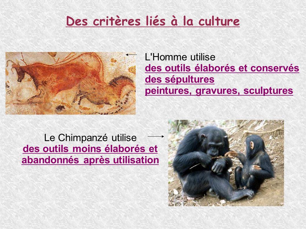 Des critères liés à la culture L Homme utilise des outils élaborés et conservés des sépultures peintures, gravures, sculptures Le Chimpanzé utilise des outils moins élaborés et abandonnés après utilisation