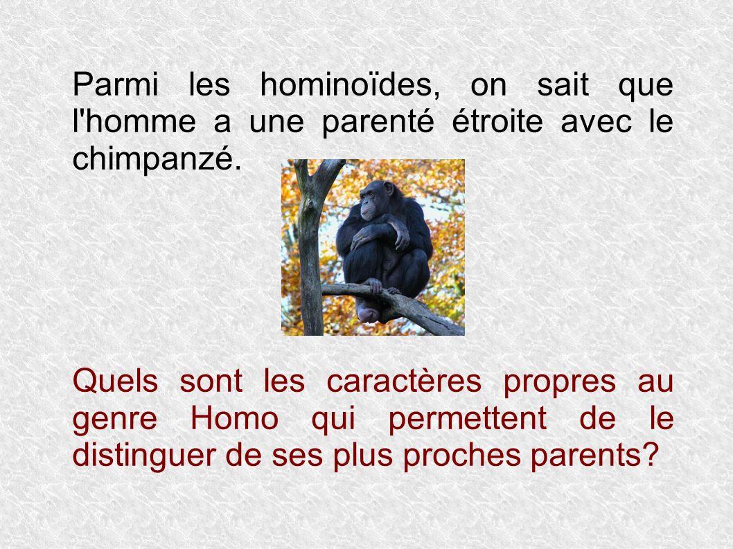Des critères liés à la bipédie Les grands singes sont quadrupèdes.