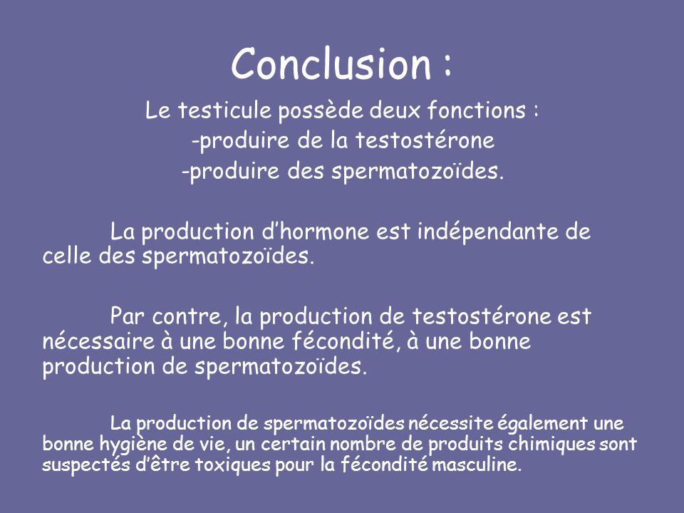 Conclusion : Le testicule possède deux fonctions : -produire de la testostérone -produire des spermatozoïdes.