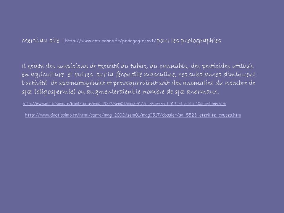 Merci au site : http://www.ac-rennes.fr/pedagogie/svt/ pour les photographies http://www.ac-rennes.fr/pedagogie/svt/ Il existe des suspicions de toxicité du tabac, du cannabis, des pesticides utilisés en agriculture et autres sur la fécondité masculine, ces substances diminuent lactivité de spermatogénèse et provoqueraient soit des anomalies du nombre de spz (oligospermie) ou augmenteraient le nombre de spz anormaux.
