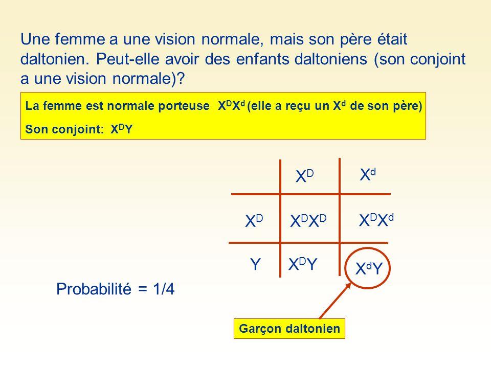 Une femme a une vision normale, mais son père était daltonien. Peut-elle avoir des enfants daltoniens (son conjoint a une vision normale)? XDXD XdXd X