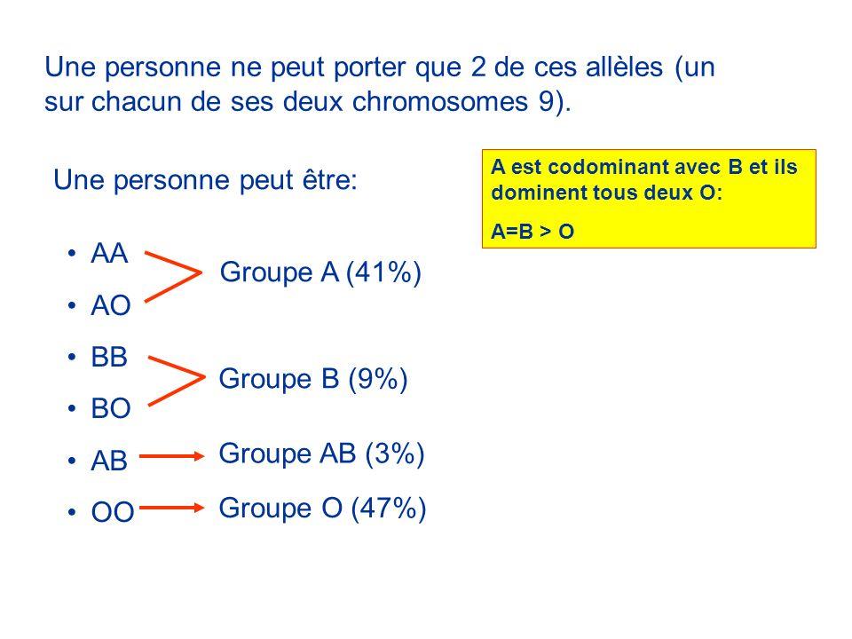 Une personne ne peut porter que 2 de ces allèles (un sur chacun de ses deux chromosomes 9). Une personne peut être: AA AO BB BO AB OO Groupe A (41%) G
