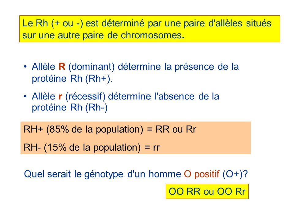 Le Rh (+ ou -) est déterminé par une paire d'allèles situés sur une autre paire de chromosomes. Allèle R (dominant) détermine la présence de la protéi