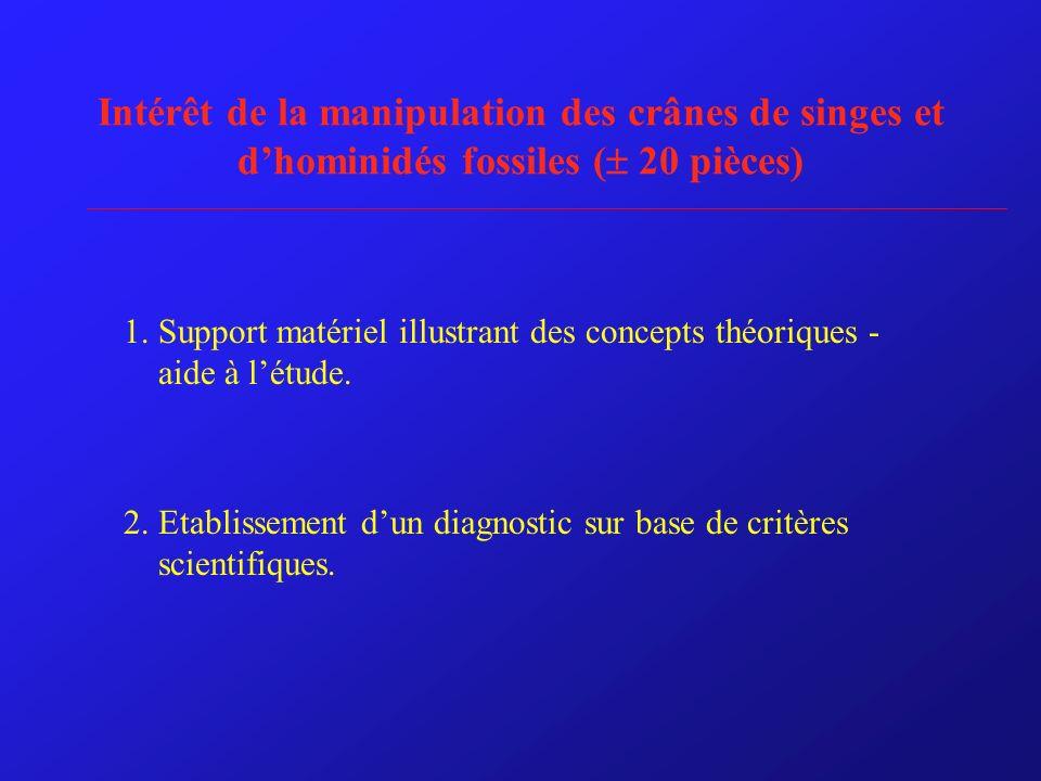Intérêt de la manipulation des crânes de singes et dhominidés fossiles ( 20 pièces) 1. Support matériel illustrant des concepts théoriques - aide à lé