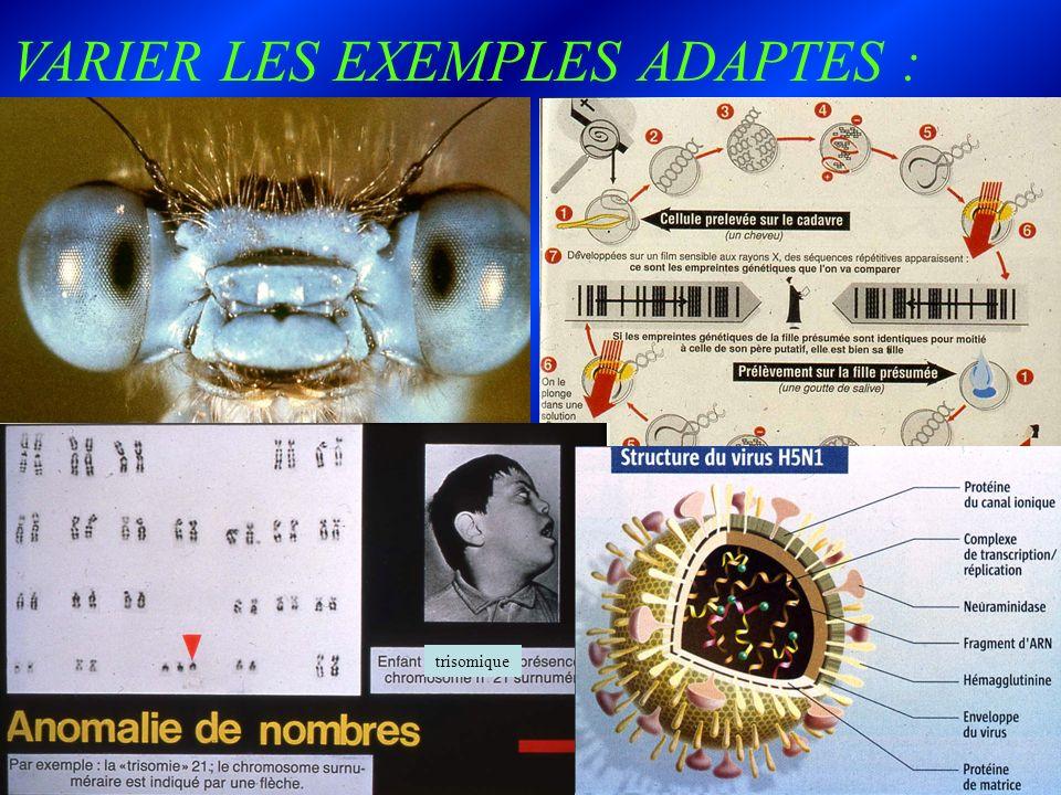 VARIER LES EXEMPLES ADAPTES : trisomique
