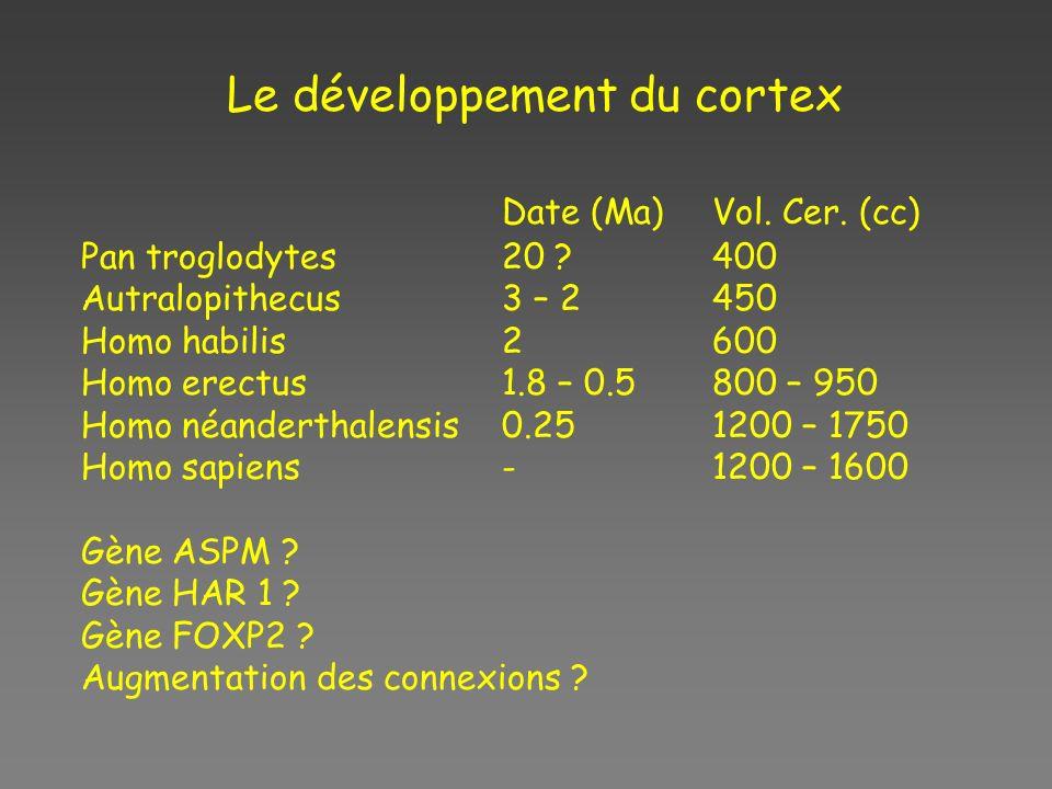 Le développement du cortex Date (Ma)Vol.Cer.
