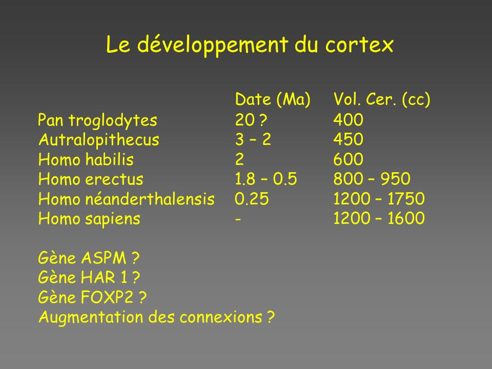 Le développement du cortex Date (Ma)Vol. Cer. (cc) Pan troglodytes20 ?400 Autralopithecus3 – 2450 Homo habilis2600 Homo erectus1.8 – 0.5800 – 950 Homo