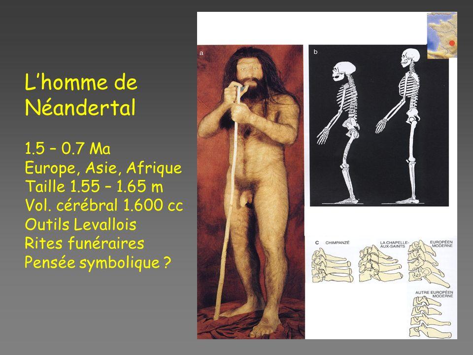 Lhomme de Néandertal 1.5 – 0.7 Ma Europe, Asie, Afrique Taille 1.55 – 1.65 m Vol.