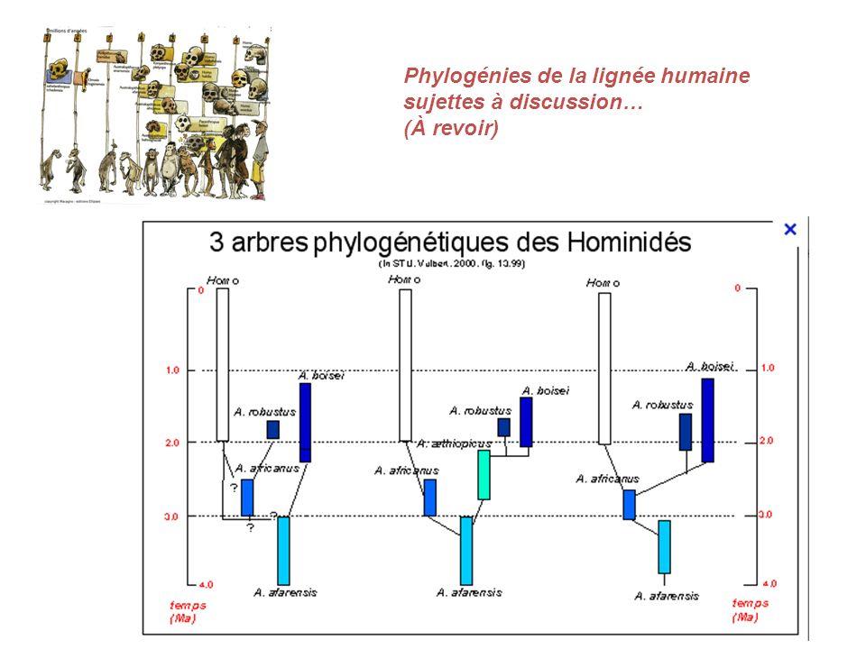 Phylogénies de la lignée humaine sujettes à discussion… (À revoir)