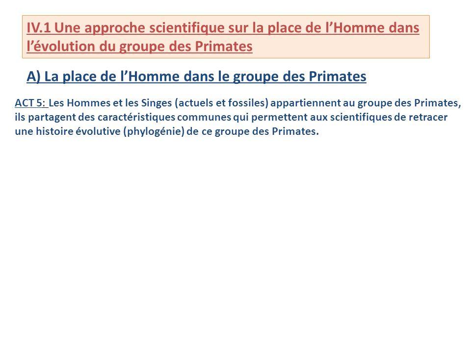 IV.1 Une approche scientifique sur la place de lHomme dans lévolution du groupe des Primates A) La place de lHomme dans le groupe des Primates ACT 5: