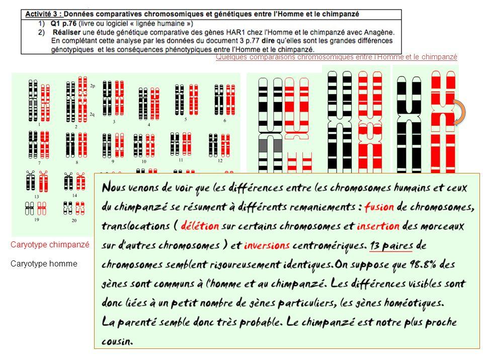 Paire 1 H: Apport génétique Paire N°2 H: fusion 2q+2p Paire N°12 H: Inversion partielle Quelques comparaisons chromosomiques entre lHomme et le chimpa