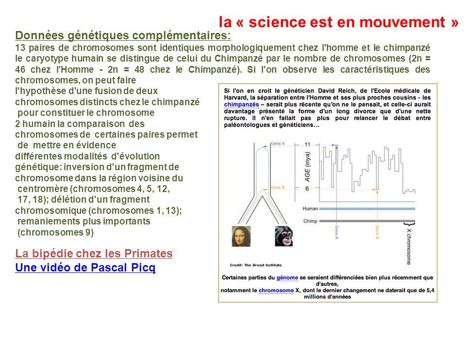 Données génétiques complémentaires: 13 paires de chromosomes sont identiques morphologiquement chez l'homme et le chimpanzé le caryotype humain se dis