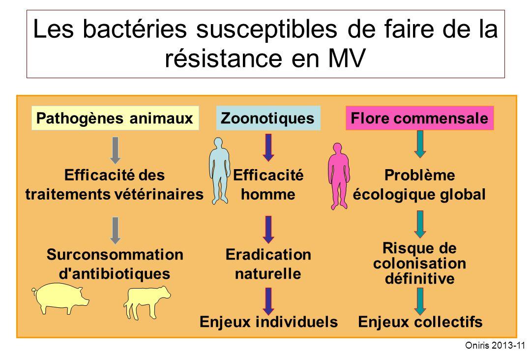 11 Les bactéries susceptibles de faire de la résistance en MV Pathogènes animauxZoonotiquesFlore commensale Efficacité des traitements vétérinaires Ef