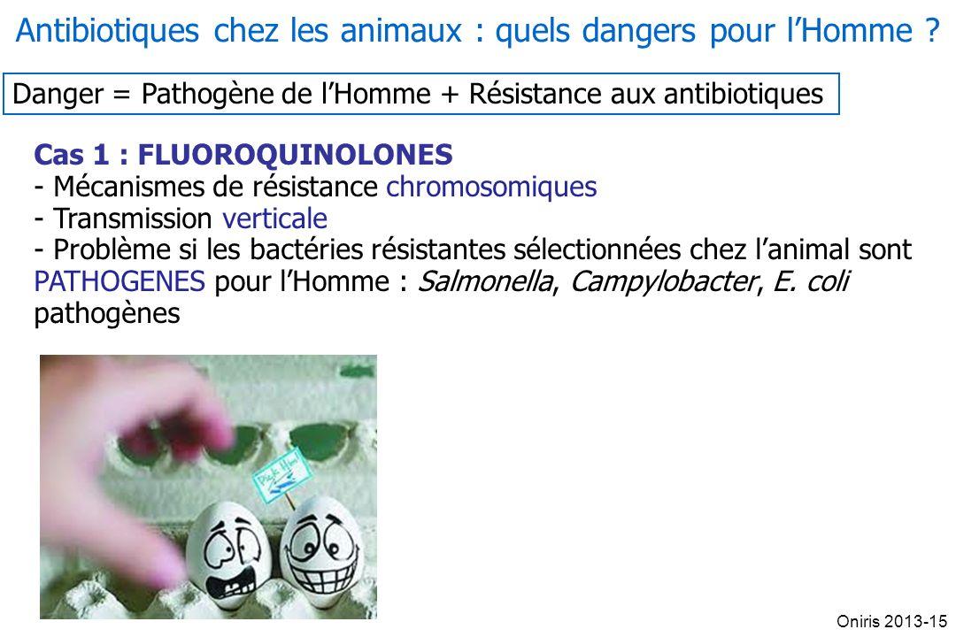Danger = Pathogène de lHomme + Résistance aux antibiotiques Cas 1 : FLUOROQUINOLONES - Mécanismes de résistance chromosomiques - Transmission vertical