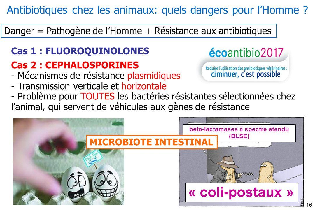 Oniris 2013-16 Cas 1 : FLUOROQUINOLONES Cas 2 : CEPHALOSPORINES - Mécanismes de résistance plasmidiques - Transmission verticale et horizontale - Problème pour TOUTES les bactéries résistantes sélectionnées chez lanimal, qui servent de véhicules aux gènes de résistance Antibiotiques chez les animaux: quels dangers pour lHomme .