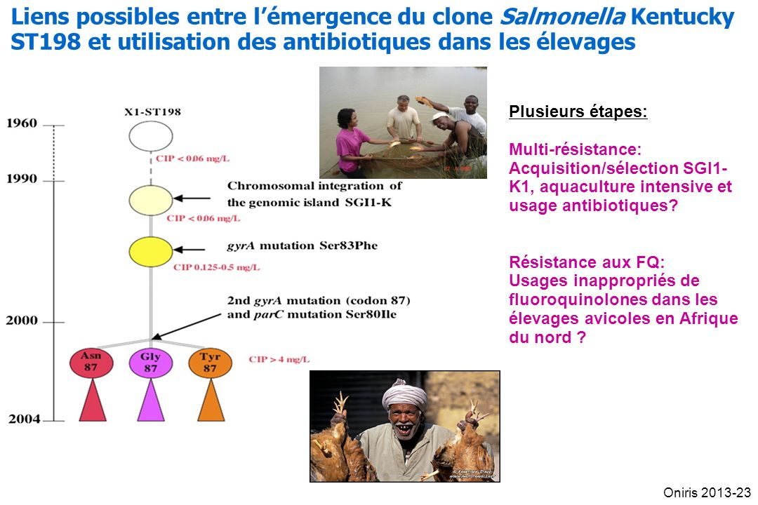 Plusieurs étapes: Multi-résistance: Acquisition/sélection SGI1- K1, aquaculture intensive et usage antibiotiques? Résistance aux FQ: Usages inappropri