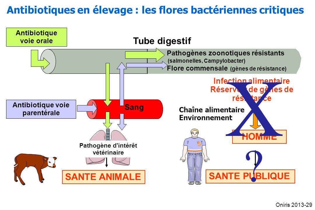 Tube digestif Sang Antibiotique voie orale SANTE ANIMALE Pathogène d intérêt vétérinaire Antibiotique voie parentérale Pathogènes zoonotiques résistants (salmonelles, Campylobacter) Flore commensale (gènes de résistance) Infection alimentaire Réservoir de gènes de résistance SANTE PUBLIQUE HOMME 55 Chaîne alimentaire Environnement X?X.