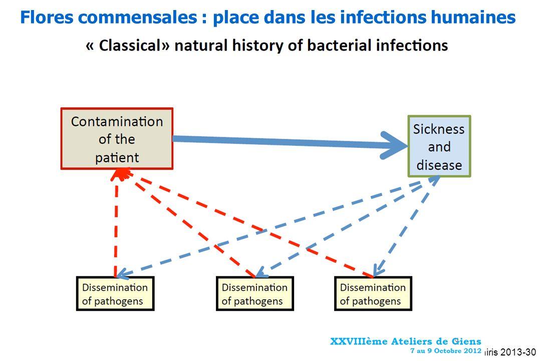 Flores commensales : place dans les infections humaines Oniris 2013-30