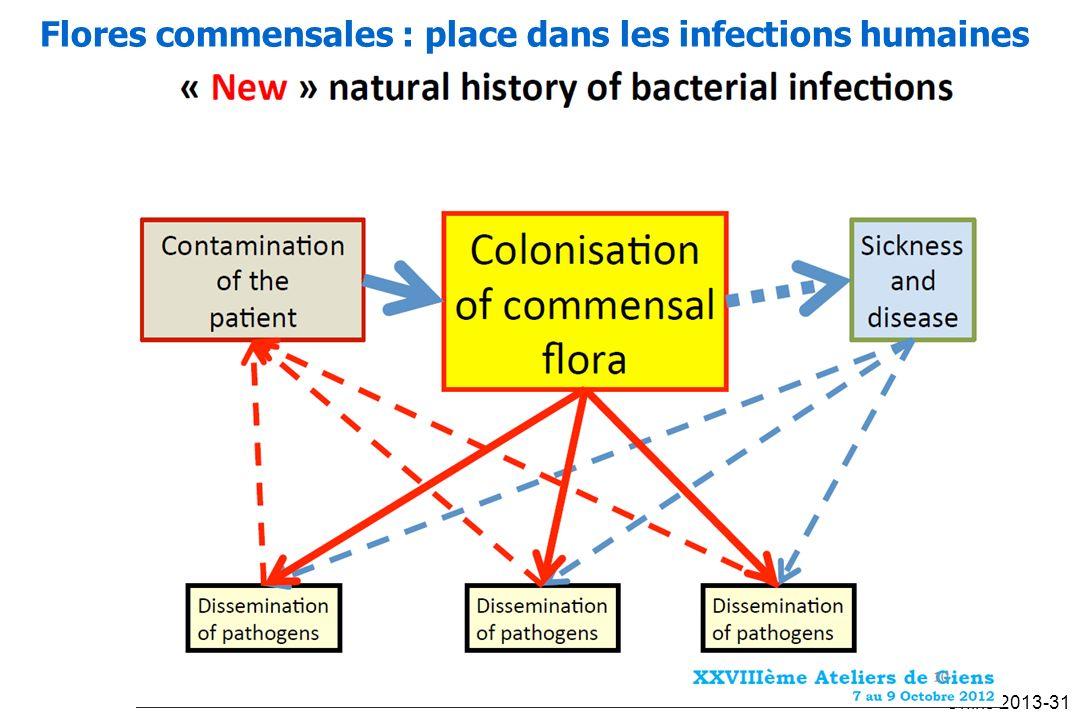 Oniris 2013-31 Flores commensales : place dans les infections humaines
