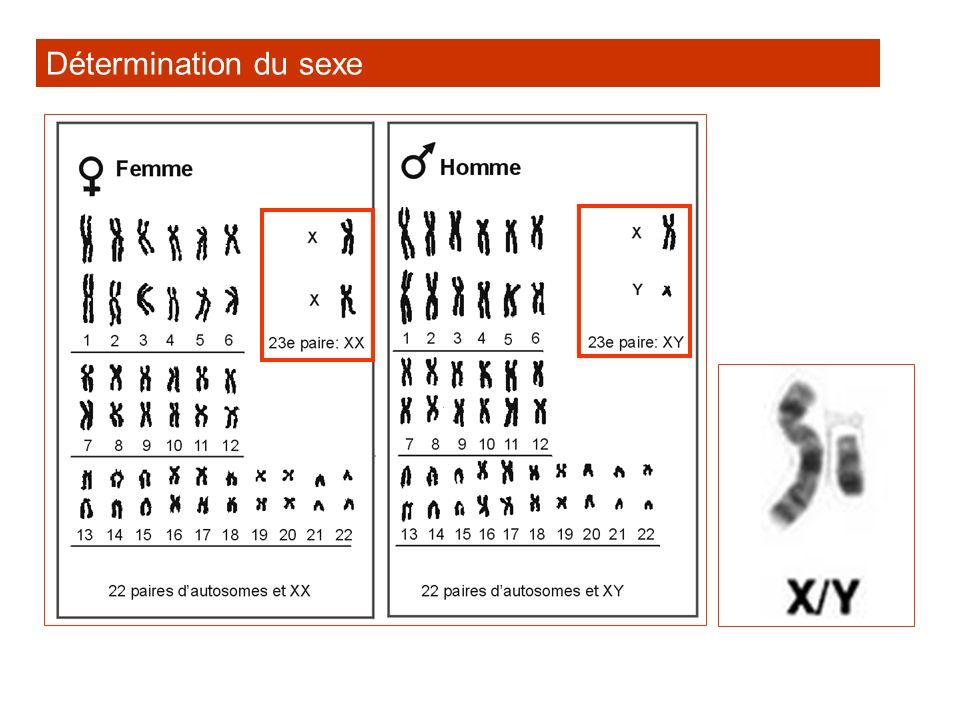 Problèmes No.9 p. 2-75 Le gène responsable de lanomalie est-il dominant ou récessif.