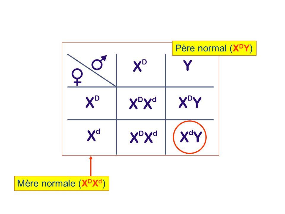 Père normal (X D Y) Mère normale (X D X d )