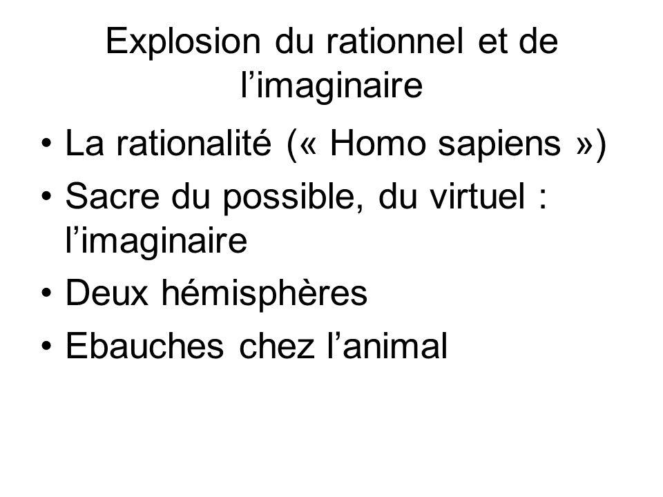 Explosion du rationnel et de limaginaire La rationalité (« Homo sapiens ») Sacre du possible, du virtuel : limaginaire Deux hémisphères Ebauches chez lanimal