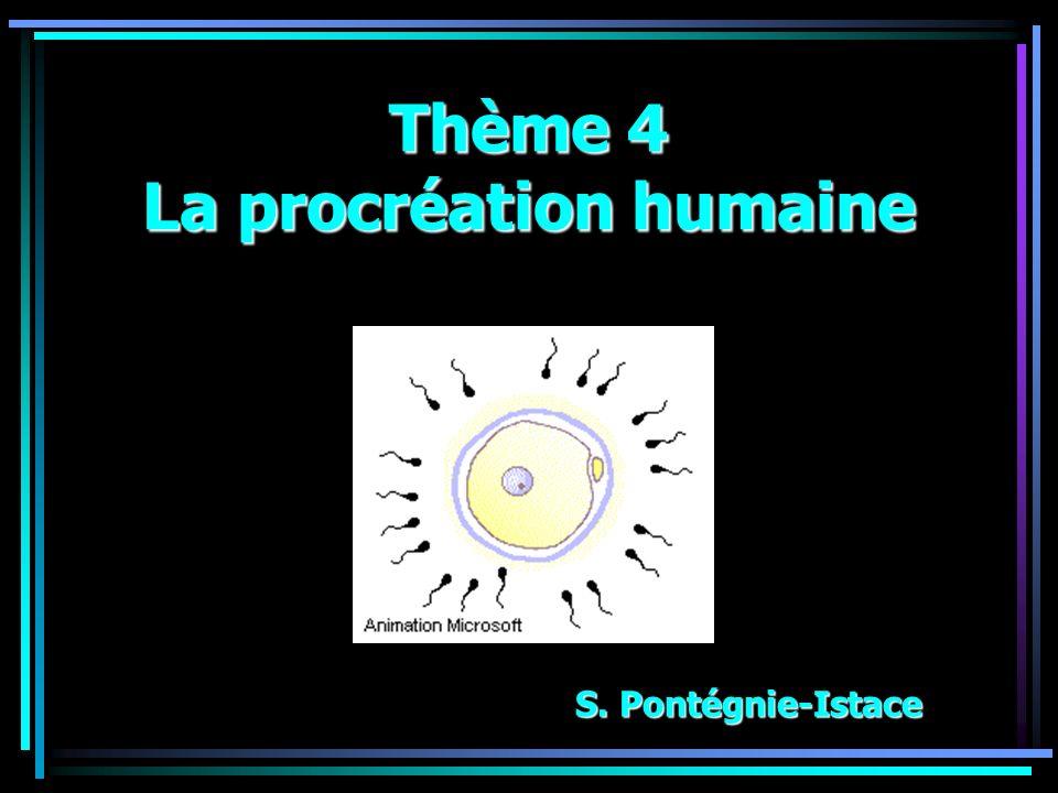 Thème 4 La procréation humaine S. Pontégnie-Istace