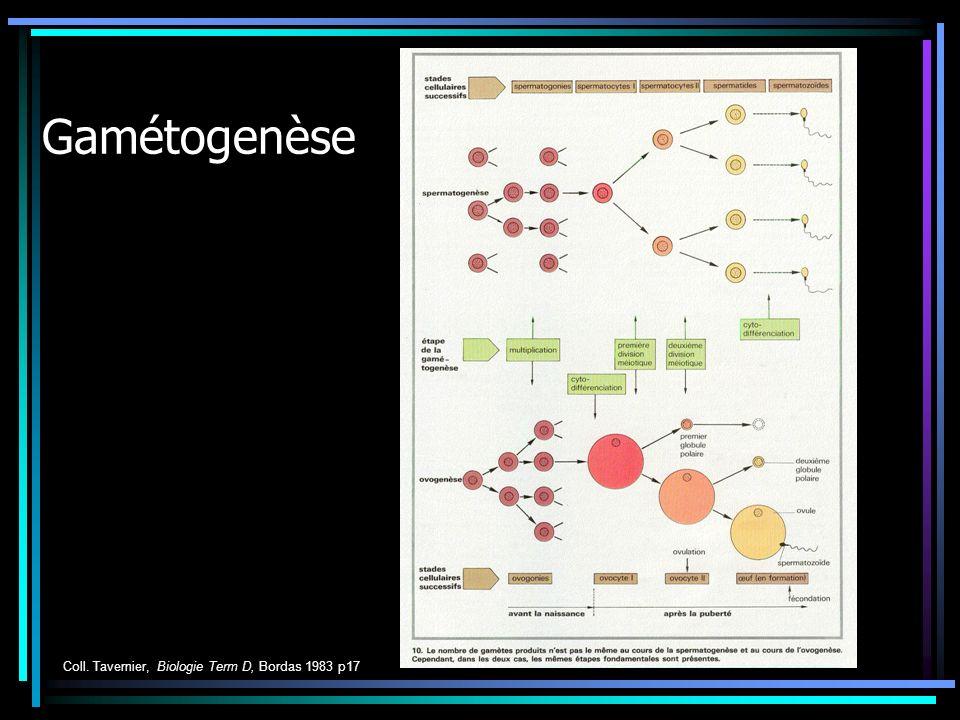 Gamétogenèse Coll. Tavernier, Biologie Term D, Bordas 1983 p17