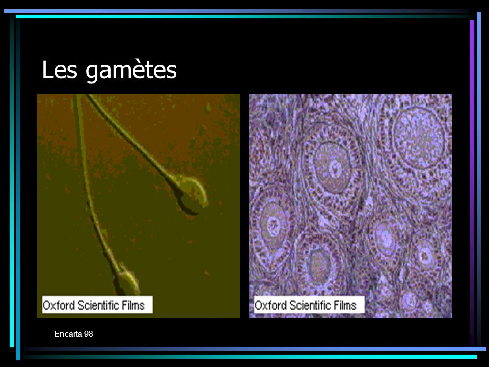 Les gamètes Encarta 98