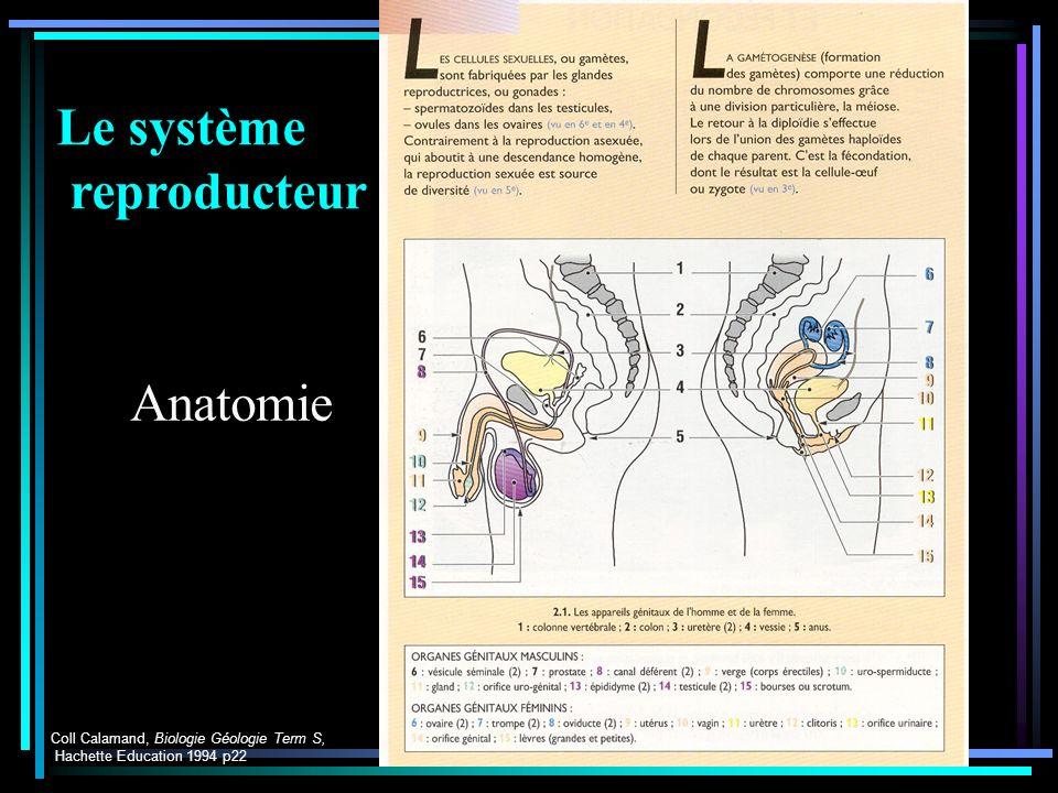 Parturition Coll Calamand, Biologie Géologie Term S, Hachette Education 1994 p22 Le système reproducteur Anatomie