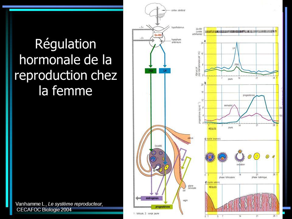 Régulation hormonale de la reproduction chez la femme Vanhamme L., Le système reproducteur, CECAFOC Biologie 2004