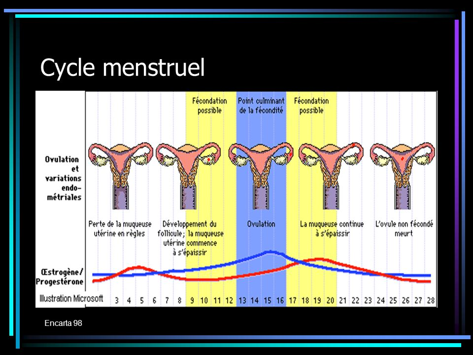 Cycle menstruel Encarta 98