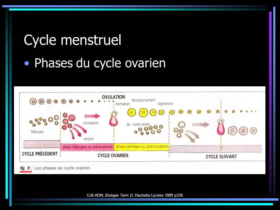 Cycle menstruel Phases du cycle ovarien Coll.ADN, Biologie Term D, Hachette Lycées 1989 p330