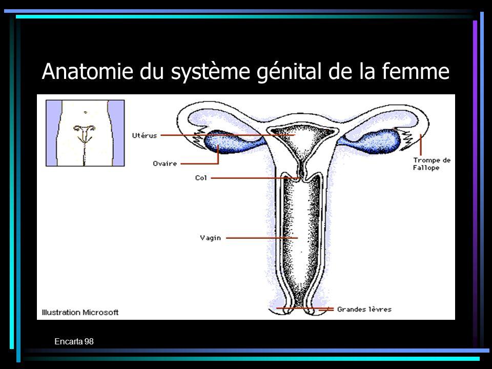 Anatomie du système génital de la femme Encarta 98