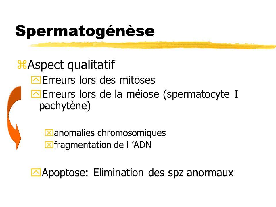 Spermatogénèse zAspect qualitatif yErreurs lors des mitoses yErreurs lors de la méiose (spermatocyte I pachytène) xanomalies chromosomiques xfragmenta