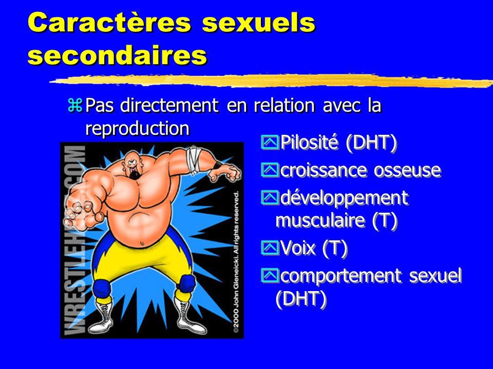 Caractères sexuels secondaires zPas directement en relation avec la reproduction yPilosité (DHT) ycroissance osseuse ydéveloppement musculaire (T) yVo