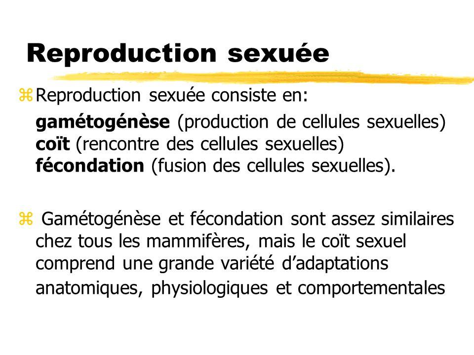 Reproduction sexuée zReproduction sexuée consiste en: gamétogénèse (production de cellules sexuelles) coït (rencontre des cellules sexuelles) fécondat