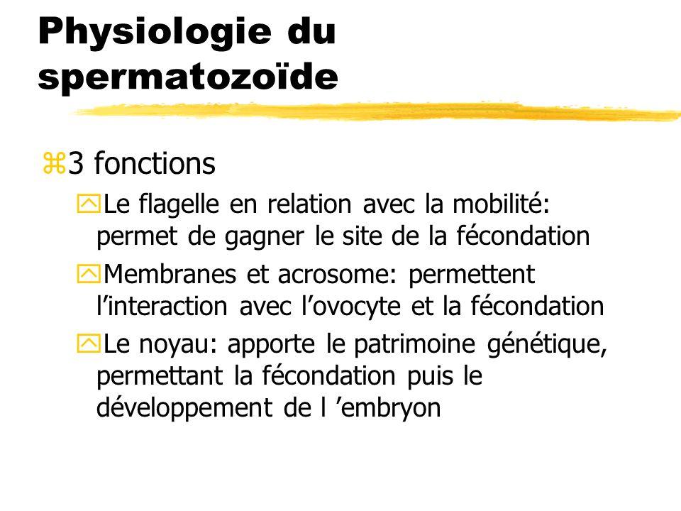 Physiologie du spermatozoïde z3 fonctions yLe flagelle en relation avec la mobilité: permet de gagner le site de la fécondation yMembranes et acrosome