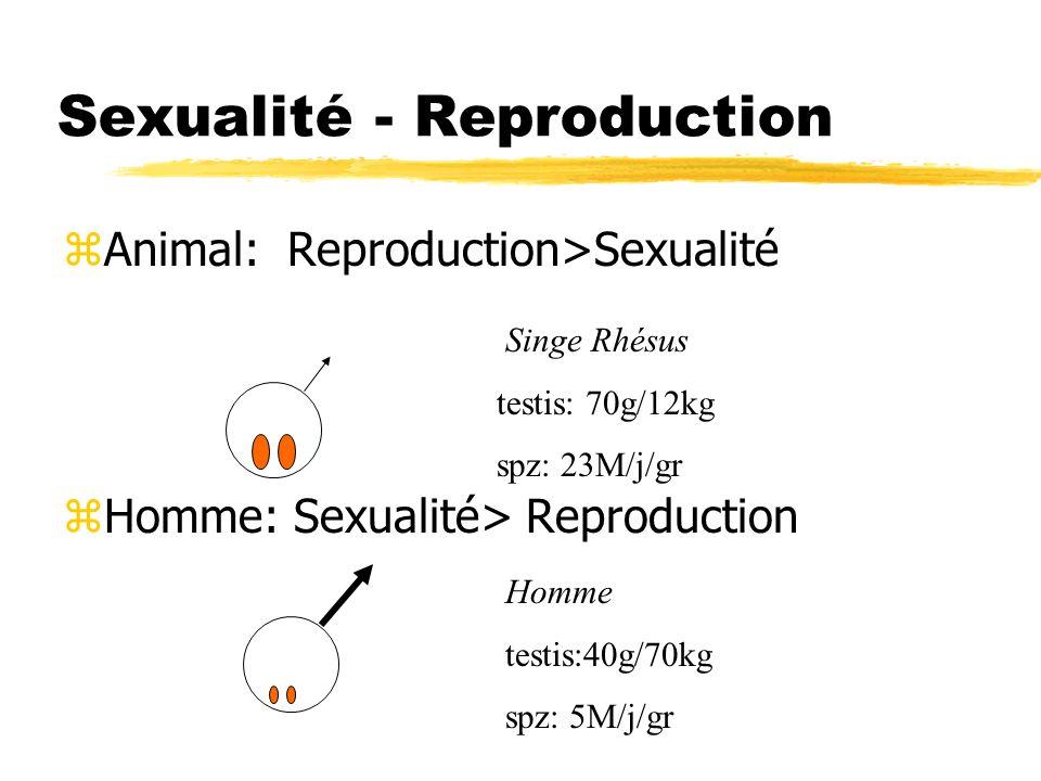 Sexualité - Reproduction zAnimal: Reproduction>Sexualité zHomme: Sexualité> Reproduction Singe Rhésus testis: 70g/12kg spz: 23M/j/gr Homme testis:40g/
