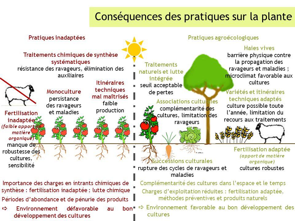 Conséquences des pratiques sur la plante Pratiques inadaptéesPratiques agroécologiques Importance des charges en intrants chimiques de synthèse : fert
