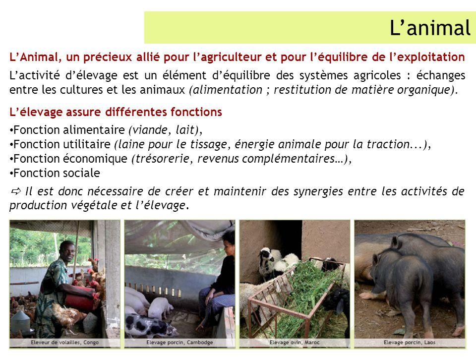 Lanimal LAnimal, un précieux allié pour lagriculteur et pour léquilibre de lexploitation Lactivité délevage est un élément déquilibre des systèmes agr