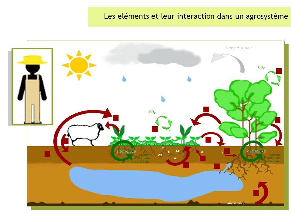 Les éléments et leur interaction dans un agrosystème Vapeur deau Mg Ca K N Roche mère CO 2 O2O2 CO 2 O2O2 P N N Recyclage favorisé par lactivité des micro-organismes Recyclage favorisé par lactivité des micro-organismes