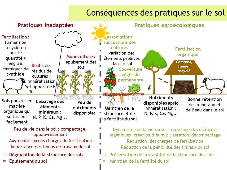 Conséquences des pratiques sur le sol Sols pauvres en matière organique qui se tassent facilement Lessivage des éléments minéraux : N, P, K, Ca, Mg...