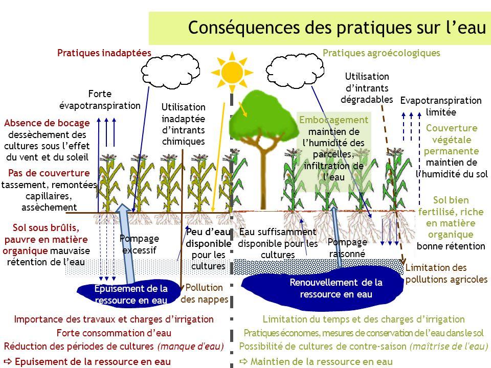 Conséquences des pratiques sur leau Importance des travaux et charges dirrigation Forte consommation deau Réduction des périodes de cultures (manque d