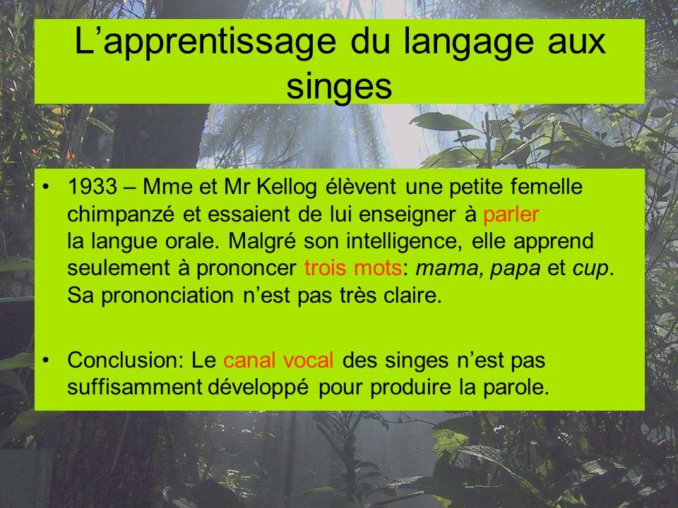Lapprentissage du langage aux singes 1933 – Mme et Mr Kellog élèvent une petite femelle chimpanzé et essaient de lui enseigner à parler la langue oral