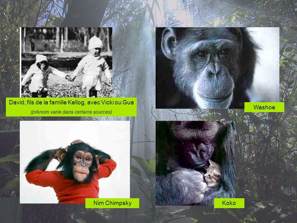 1980 - Herbert S.Terrace et son chimpanzé Nim Chimpsky.