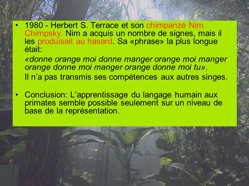 1980 - Herbert S. Terrace et son chimpanzé Nim Chimpsky. Nim a acquis un nombre de signes, mais il les produisait au hasard. Sa «phrase» la plus longu