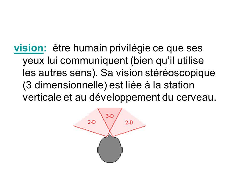 vision: être humain privilégie ce que ses yeux lui communiquent (bien quil utilise les autres sens). Sa vision stéréoscopique (3 dimensionnelle) est l