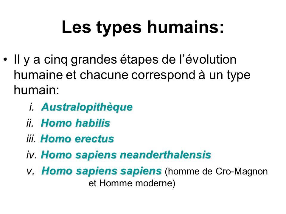 Les types humains: Il y a cinq grandes étapes de lévolution humaine et chacune correspond à un type humain: Australopithèque i. Australopithèque Homo