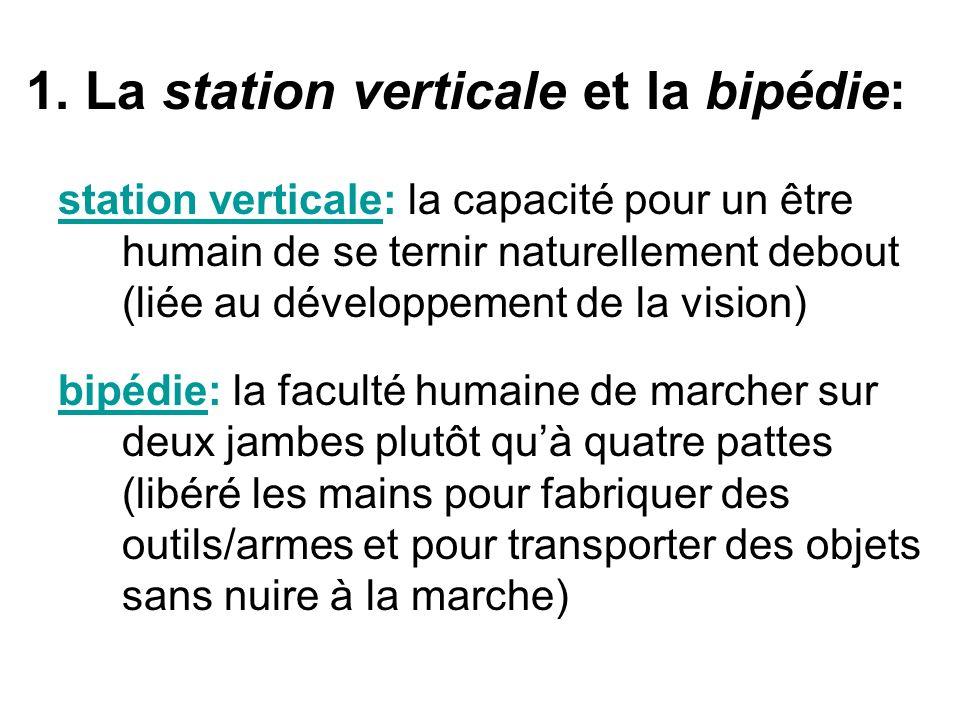 1. La station verticale et la bipédie: station verticale: la capacité pour un être humain de se ternir naturellement debout (liée au développement de